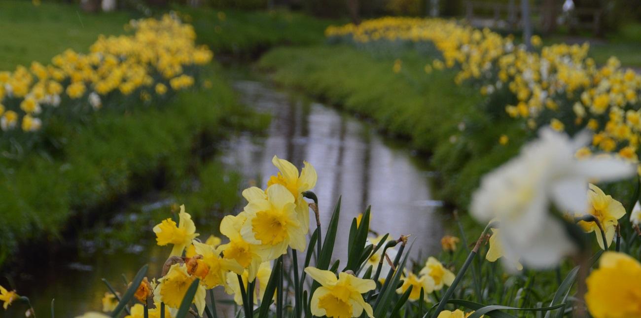 Dunzelbach im Frühling